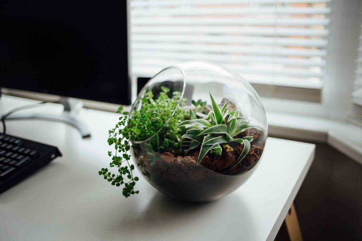 How to make glass balloon planter